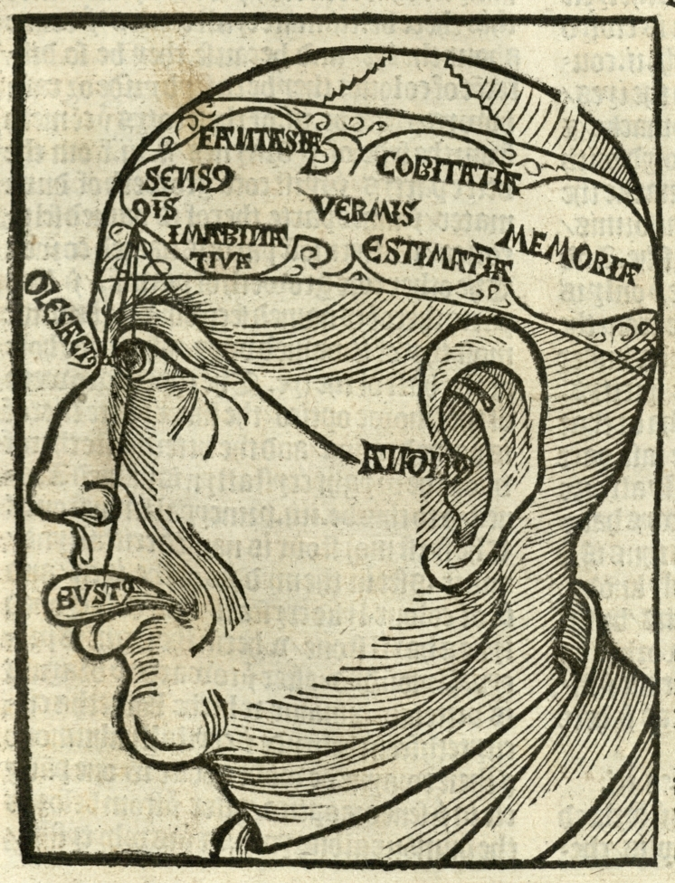 Anatomical diagram of the head and brain