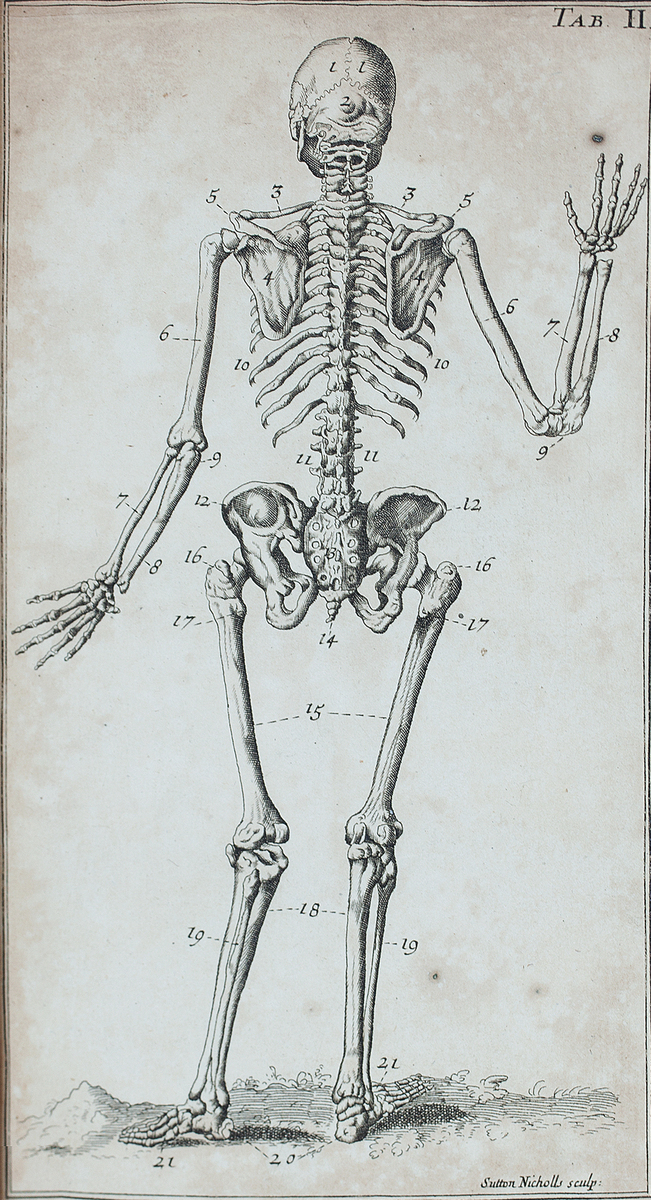 The back view of a sceleton: from Dr. Douglass