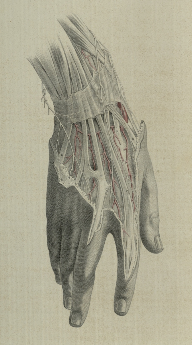 The surgical dissection of the wrist and hand