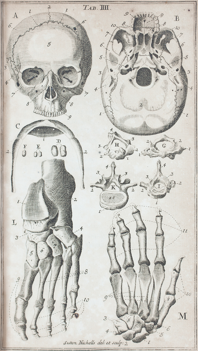 Anatomical diagram of the skull, hyoid, foot, hand, and vertebrae