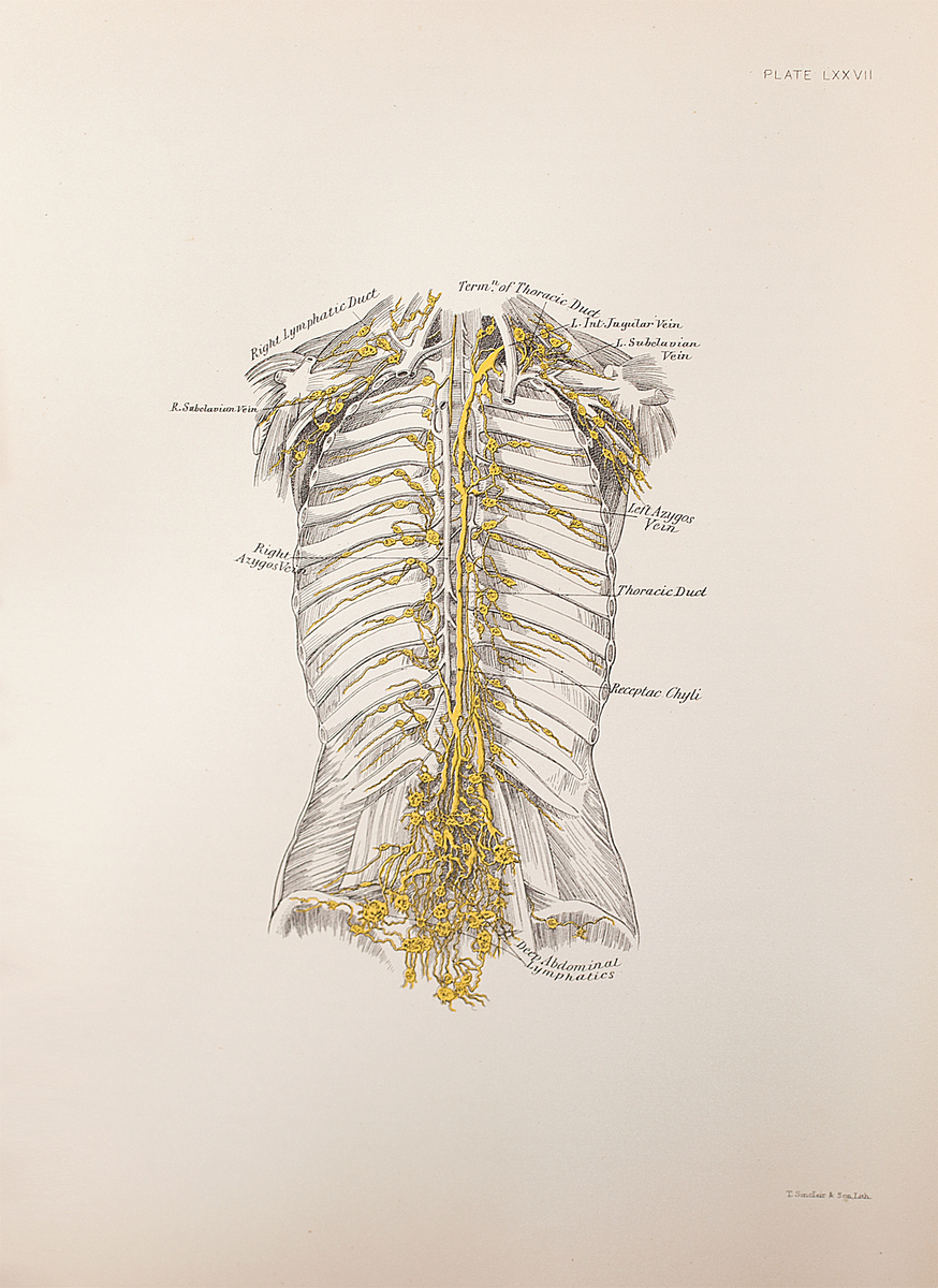 Anatomical diagram of the lymphatics of the trunk