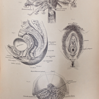 Anatomical diagram of female reproductive organs