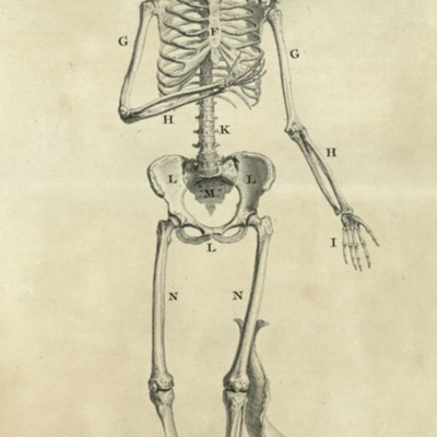 The sceleton of a woman, in the same proportions with the venus of Medicis