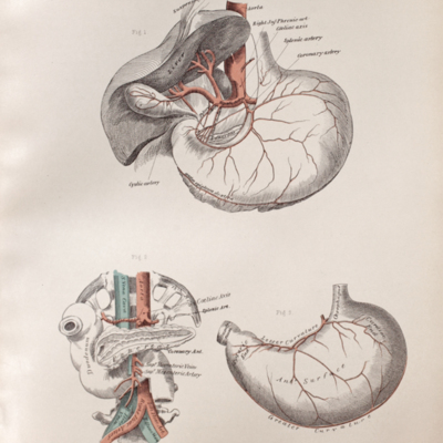 Anatomical diagram of the arteries of the stomach, liver, pancreas, and duodenum