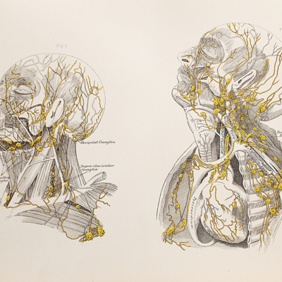 Anatomical diagram of the lymphatics of the head and neck