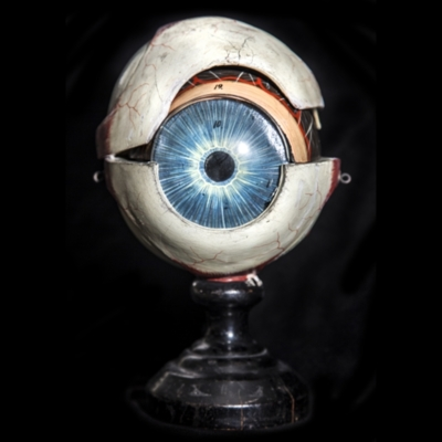 Papier-mâché Eyeball Model
