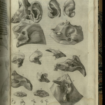Structures of the ear, circa 1600