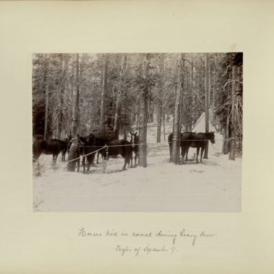 Horses tied in corral during heavy snow : night of September 9