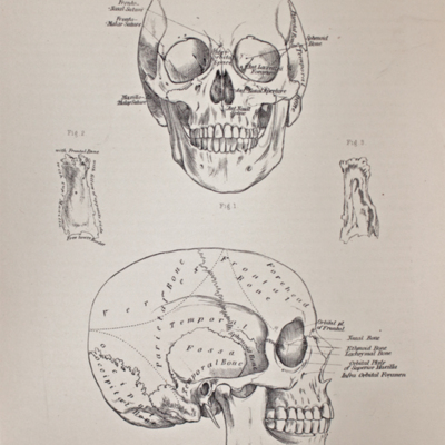 Anatomical diagram of the skull and nasal bone
