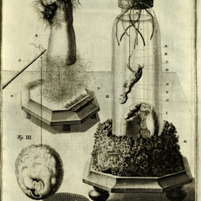 Fetal arm with hair, specimen jar with small quadruped, and a bursula