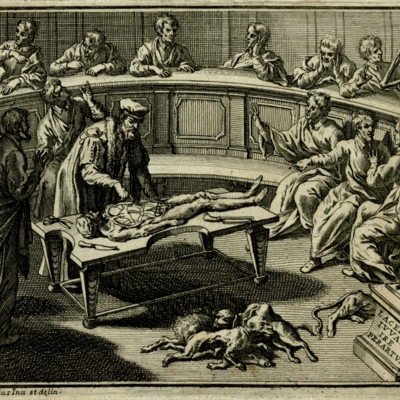 Dissection scene