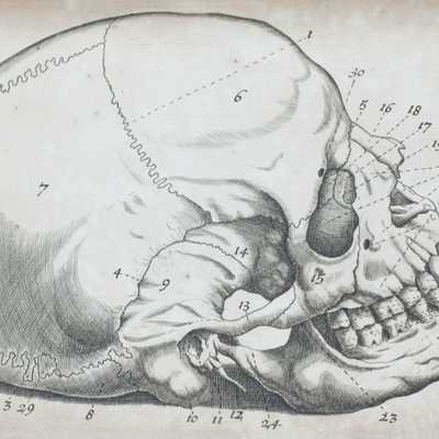 The bones of the head: from Dr. Douglass