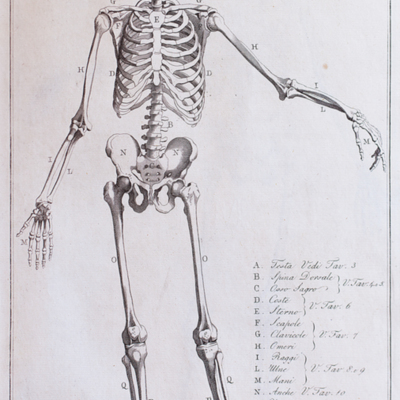 Anatomical diagram of the human skeleton