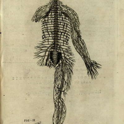 Anatomical diagram of the nervous system