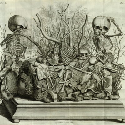 A composition of two fetal skeletons