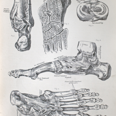 Anatomical diagram of the ankle-joint and tibio-fibular articulations